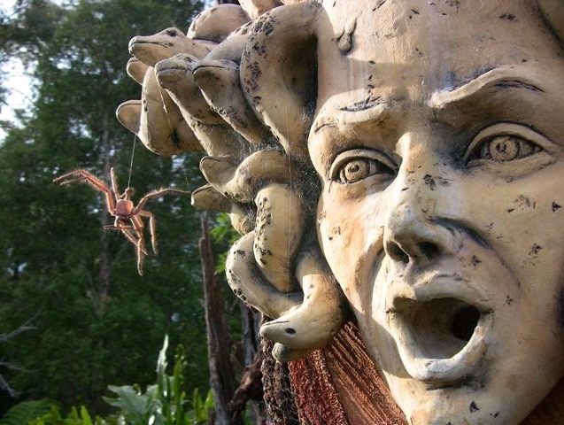 Medusa on BigTree, MoonCourt, Blue Mountains close up glenys